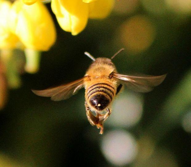 bee flying away