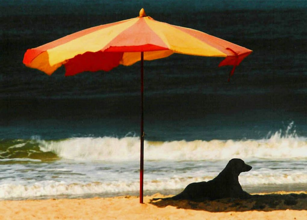 dog on the beach under a sun umbrella