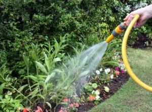 watering flowers with a garden hose
