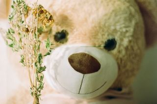 teddy with dried flowers