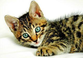 bright eyed kitten