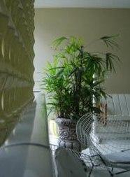 houseplant specimen