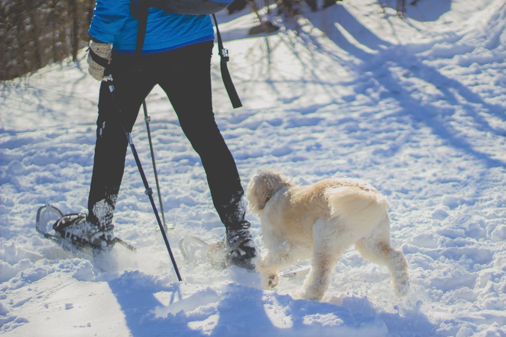 walking with dog in winter