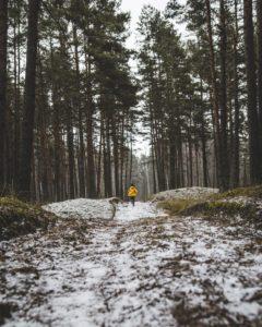 running through light snow in winter